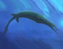 A mosasaur, a type of aquatic dinosaur believed to have become extinct at the end of the Cretaceous Period